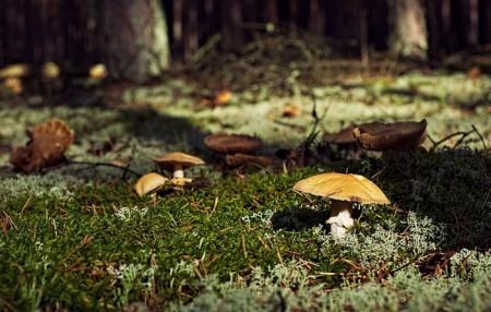 Sekrety lasu, tajemnice runa leśnego